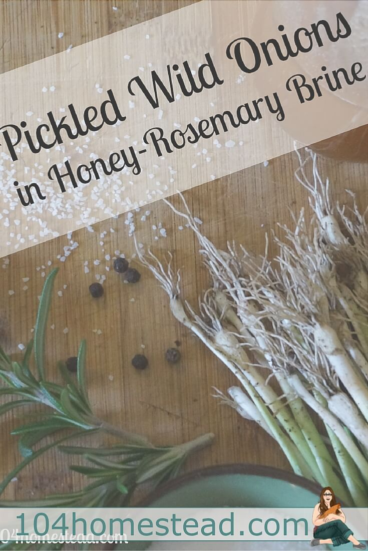 This lovely honey-rosemary brine gives a wonderful flavor to not only wild onions, but to garlic cloves, sliced shallots, green onions and other vegetables, as well.