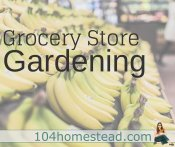 Grocery Gardening for Healthier Plants