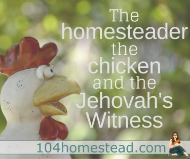 The homesteader, the chicken, and the Jehovah's Witness. A funny homesteading story, because you can't make this stuff up.