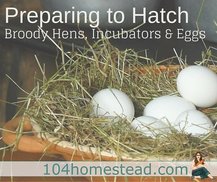 Covering everything from choosing an incubator or broody, what's going on in the egg, tricks to make things run smoothly, hatch day and then caring for your new fluffy friends.