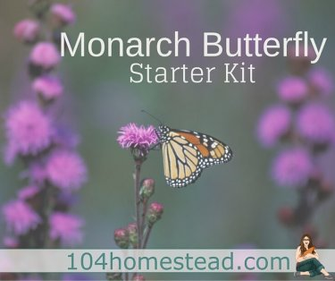 Regardless of the size of your homestead, you can create a Monarch habitat by providing food, water, cover, and a place for the caterpillars to grow.