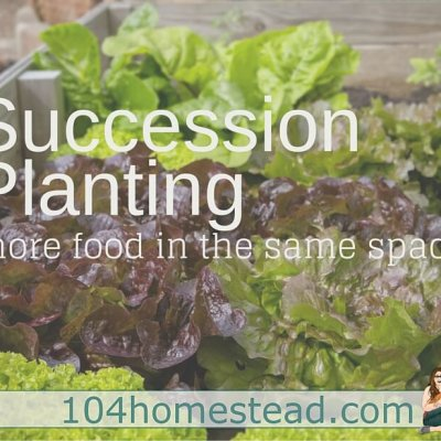 Succession Planting: Growing More In the Same Space