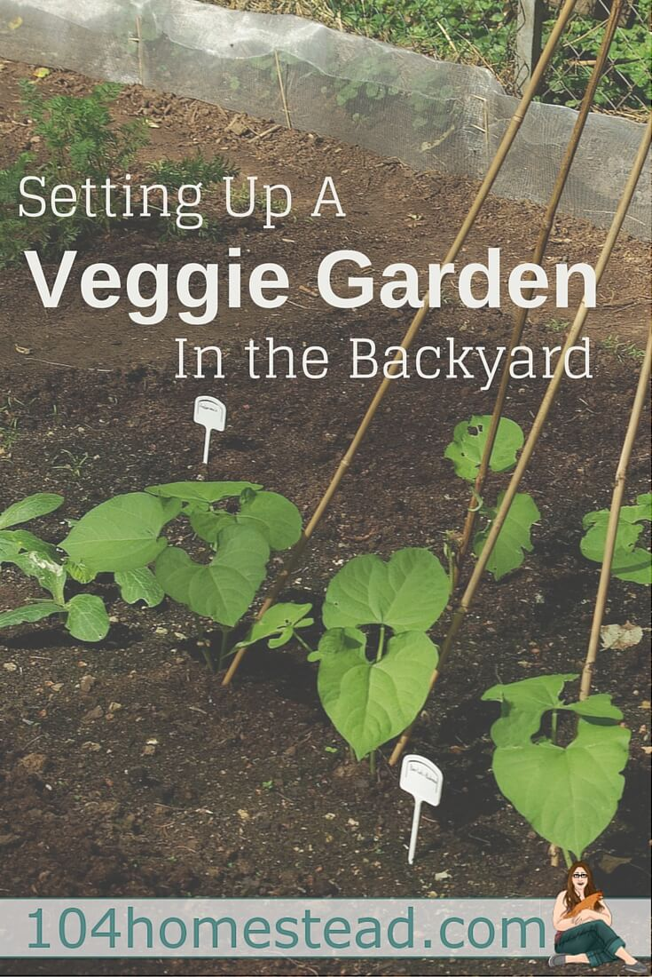 More people are turning to growing their own organic vegetables in their backyards. Setting up a veggie garden in your backyard has many advantages.