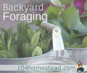 Backyard Foraging: Food from Your Yard