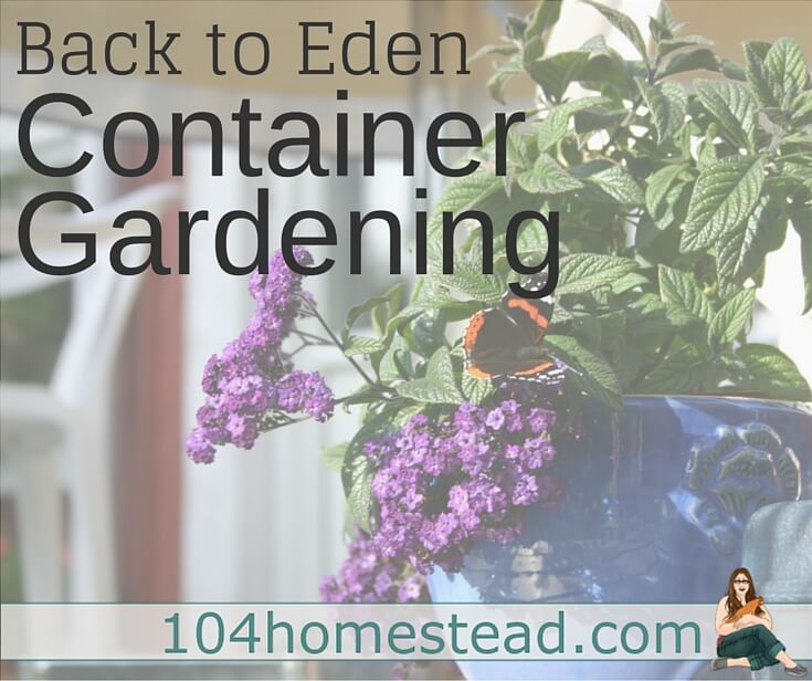 I promise, if you try Back to Eden container gardening, you'll be very pleased with the results. The result were just as impressive as they were in the garden.