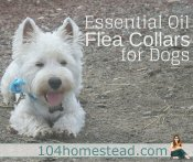 Make a DIY Essential Oil Flea Collar for Your Dog