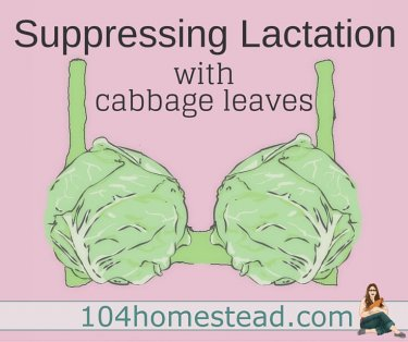 Just another new-age hippie thing? Ask your grandmother what was recommended to her. Cabbage leaves have been used for suppressing lactation for eons.