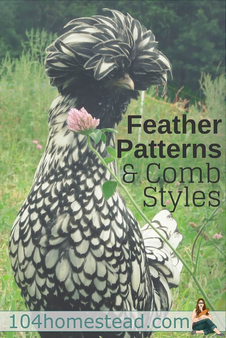 feather patterns u0026 comb styles of chickens