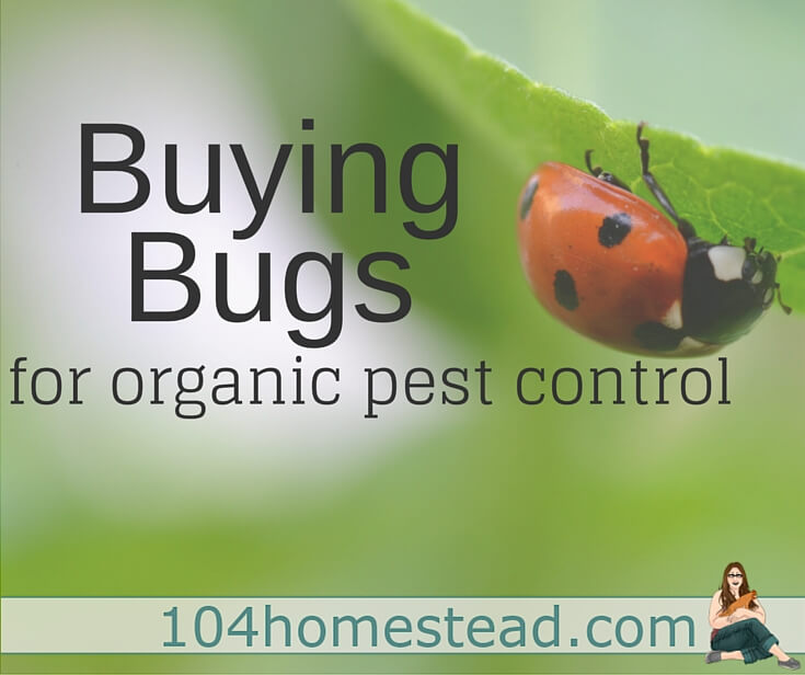 Organic Pest Control {Buying Beneficial Bugs}