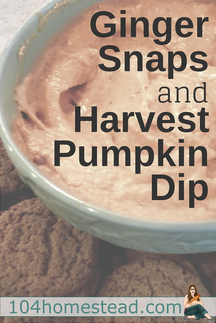This pumpkin dip turns ginger snaps into tiny little bites of pumpkin pie. It is beyond delicious and incredibly easy to make.