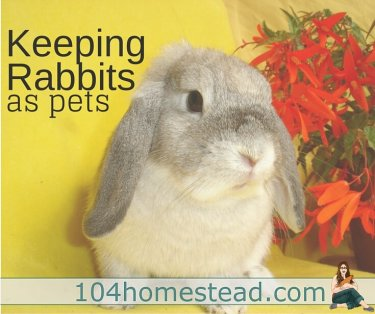 Rabbits can be fun and affectionate pets. I like to think of them as a funny mash up between cats and dogs. They can be very sweet, affectionate, entertaining, and fun.