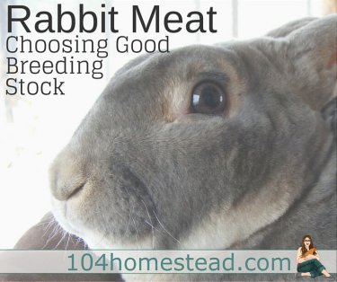 Any rabbit can be eaten, no matter how cute, hairy or small but some are a lot more practical for producing meat. Learn how to choose good breeding stock.