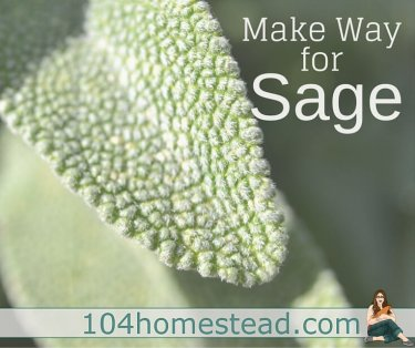 Sage (Salvia officinalis) is commonly referred to as common sage, or garden sage, but common doesn't do it justice and it deserves a space in the garden.