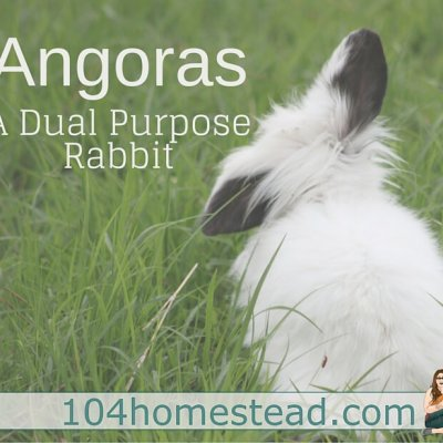 Raising Angoras: The Perfect Dual Purpose Rabbit