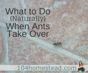 Get Rid of Ants Naturally With These Tips