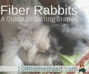 Raising Fiber Rabbits – What You Need to Know