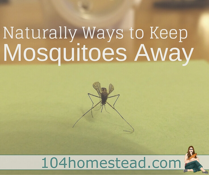 Ways to Keep Mosquitoes Away Naturally