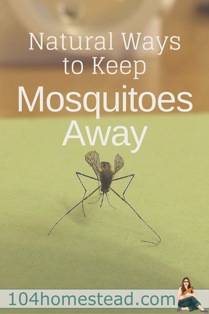 I Ve Been Experimenting With Natural Ways To Keep Mosquitoes Away For A Few Years