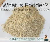 What is Fodder? Sprouted Barley for Livestock