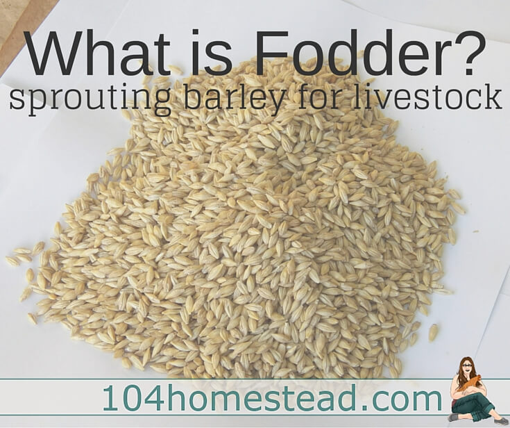 Sprouting fodder is something farmers have been done for generations. Let's chat about sprouted barley because it's a great all-around grain for livestock.