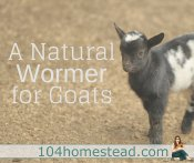 Squirmy Wormy: A Natural Wormer for Goats