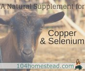 Mineral Mojo: A Selenium Supplement for Goats