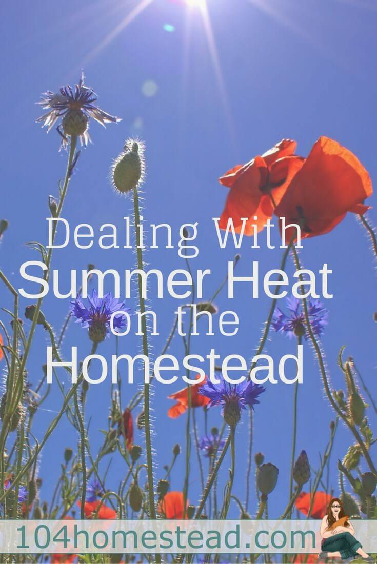 Some of the best stuff on the homestead happens in summer, but summer comes with struggles as well. Hears how to deal with it and survive it.