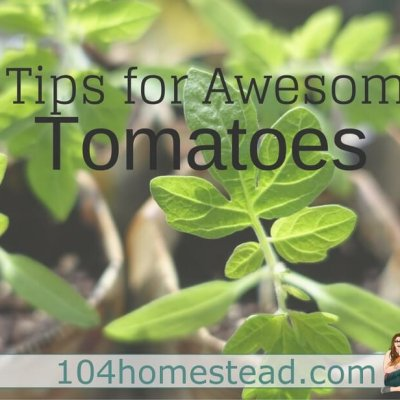 The 3 Secrets to Growing Beautiful Tomatoes