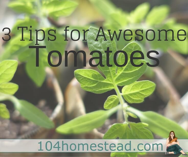 No garden is complete without tomatoes. It's the star when planting on a patio or in a huge garden. Here are tips for growing amazing tomatoes.