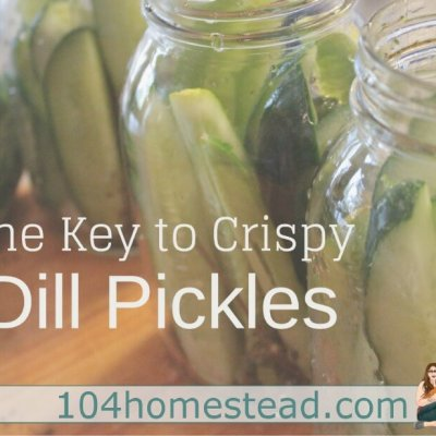 Dill Pickle Recipe (with Surprise Leaf for Crispiness)