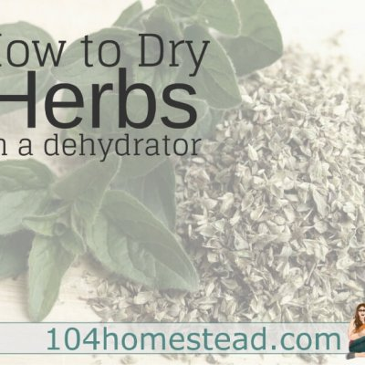 How to Dry Herbs Easily with a Dehydrator