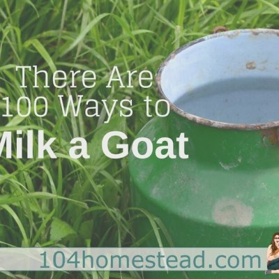There Are 100 Ways to Milk a Goat – Find the Right Way for You