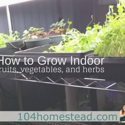 How to Grow Indoor Fruits, Vegetables & Herbs