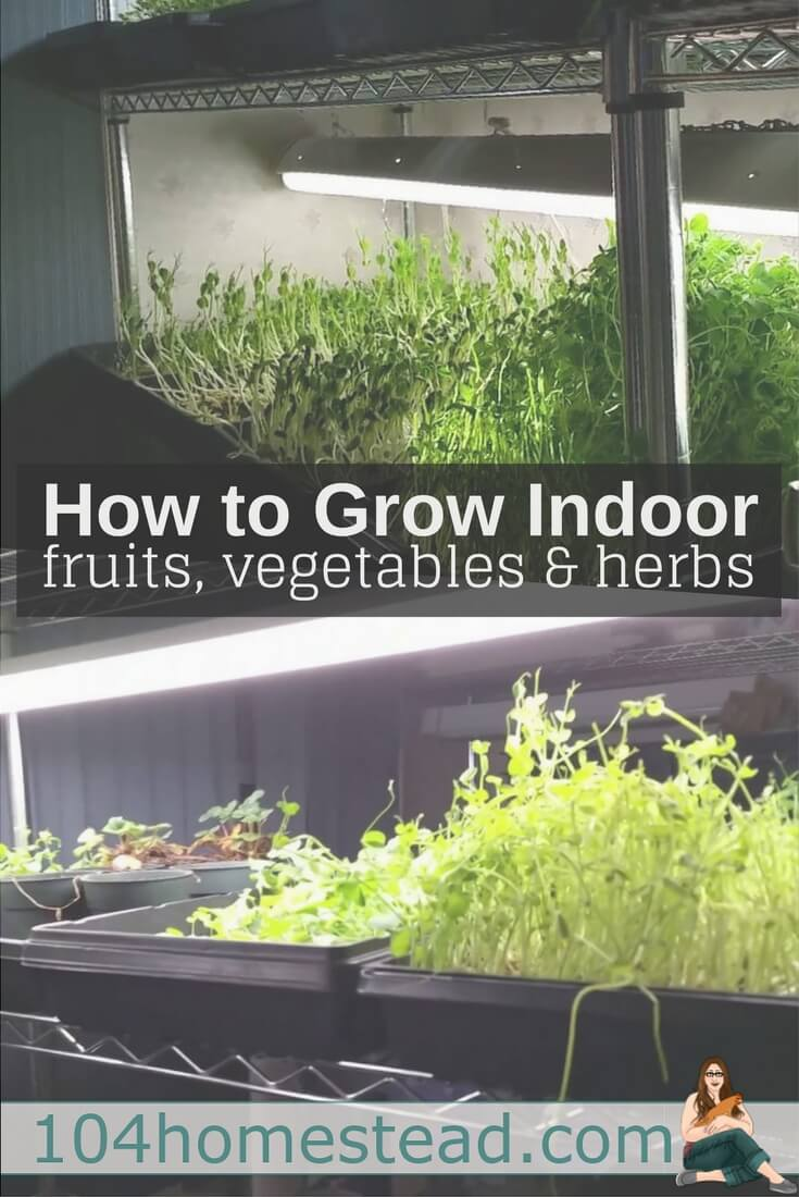 Are you ready to learn how to grow food indoors? There are a lot of options that are suited to indoor gardening. Here's what to grow and how to grow it.