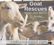 Goat Rescues: What you really need to know