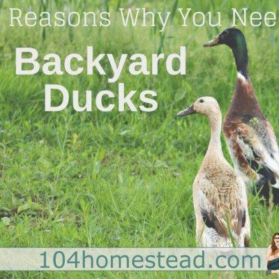 5 Reasons You Need Backyard Ducks on Your Homestead