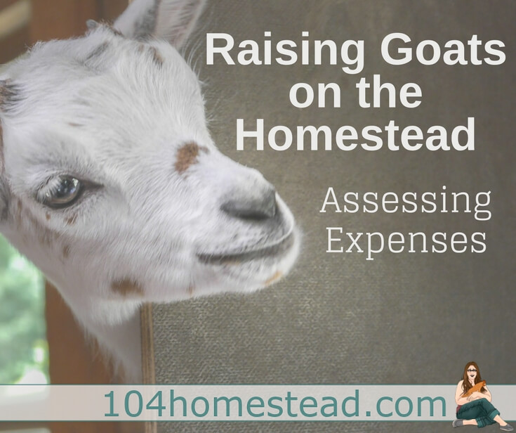 Many people aren't raising goats to earn massive profit, but taking stock of cost versus benefit is essential to making the most of your time and money.