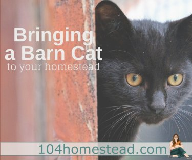 A small black barn cat peeking past a door frame,