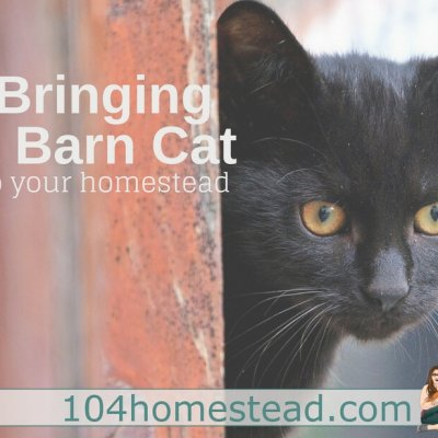 Bringing a Barn Cat (or two) to Your Homestead