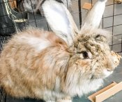 Litter Box Material for Angora Rabbits That Won't Get Trapped in Fur