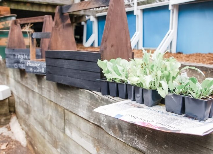 Need a simple and easy craft for this weekend? This DIY Chalkboard Planter is super easy and oh so cute! It's perfect for indoor herb gardens to cheer up your home during the long cold garden-free winter.
