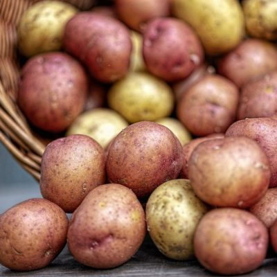 Planting Potatoes in a Back to Eden Garden