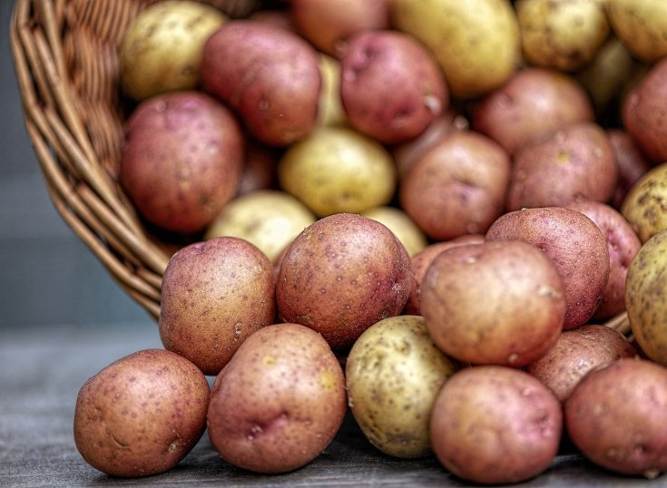 A mixture of red and white potatoes spilling from a basket on a gray backdrop.