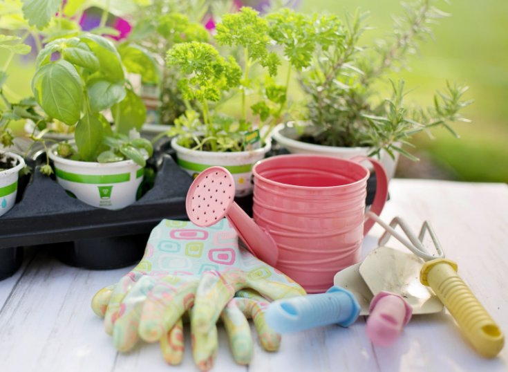 Potted herbs in a nursery carrier sitting on a table outside, ready to be transplanted, with gardening gloves, a trowel, and a pink watering can.