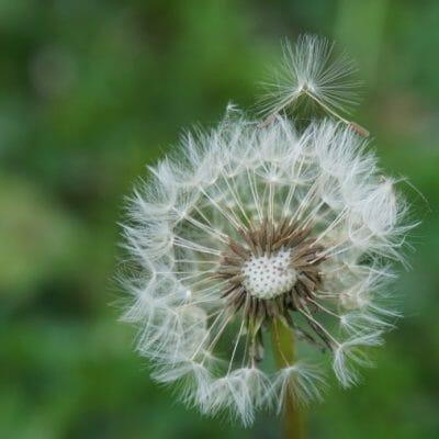 Weeding & Fungi in Your Back to Eden Garden