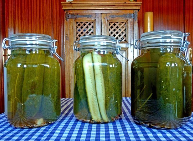 Freshly canned pickles in fido jars sitting on a table with a blue and white gingham table cloth.